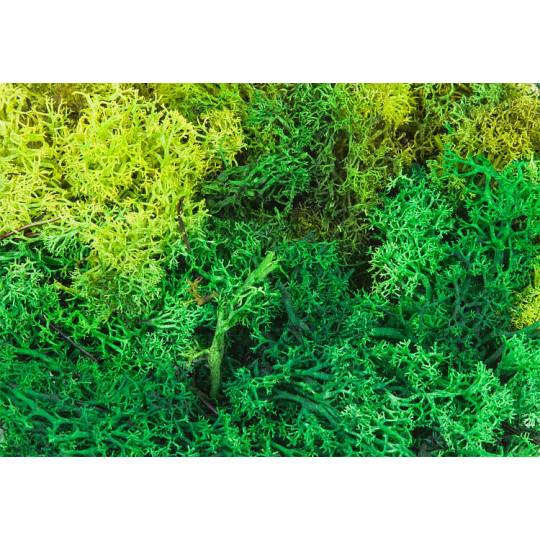Lichens 1/87 HO FALLER